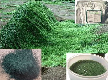 Super Greens: The power of wheat grass, spirulina and barley grass ...