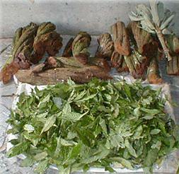 ayahuasca prep1